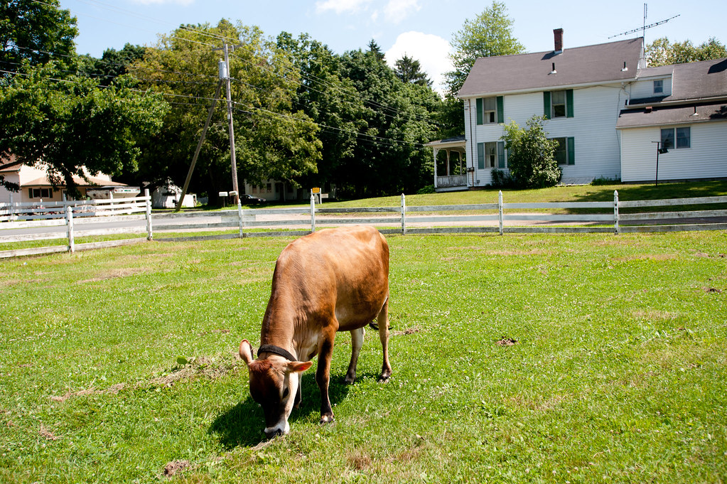 Mapleline Farm, Hadley,MA