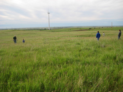 Bird watching tour participants help conduct a nest drag, a low-tech census of nesting birds, with Headley Ranch windmills in the background.