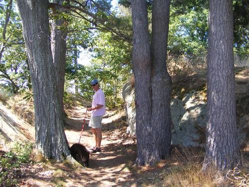 Endymion island path
