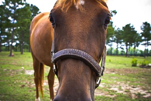 110709 Curious Horse