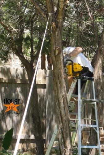 yard_work_tree_cutting_11