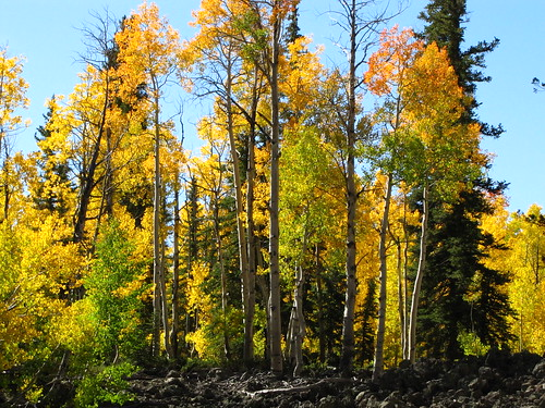 IMG_3838_Yellow_Aspen_Along_Utah_14