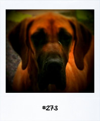 "#Dailypolaroid of 24-6-11 #273 #fb • <a style=""font-size:0.8em;"" href=""http://www.flickr.com/photos/47939785@N05/5873662484/"" target=""_blank"">View on Flickr</a>"