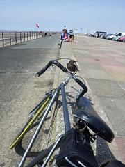 2011-06-14 14.27.25 (Dave Gurney) Tags: bird beach bike bicycle perch singlespeed fixie fixedgear handlebars roadbicycle raodbike