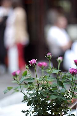 frenchie wine bar roses