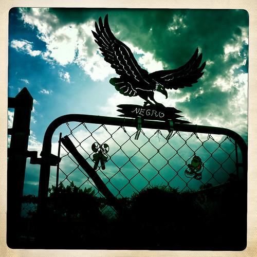 Águila Negro