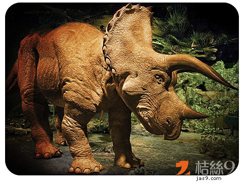 Triceratops-2