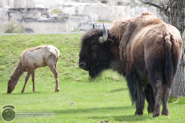 Yellowstone Day 2 52711 © Michael Klayman-035