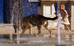 Keeping cool (* RICHARD M (Over 6 million views)) Tags: street summer dogs wet water fun candid july fountains germanshepherd southport alsation sefton lordst