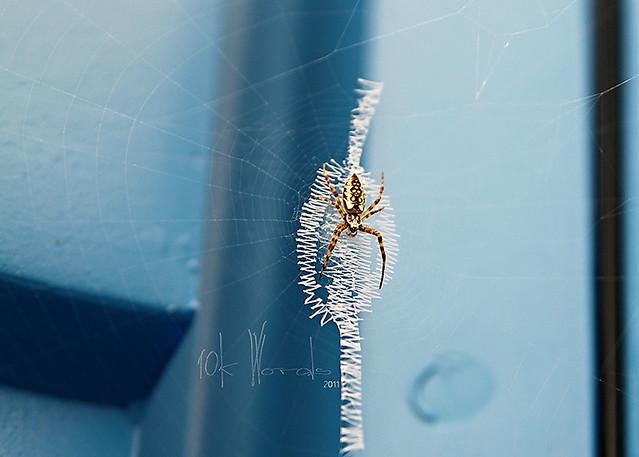 resourceful spider 2