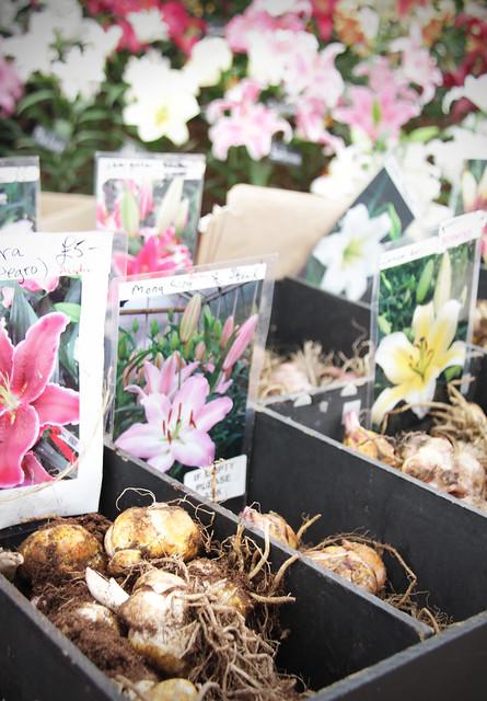 Lily bulbs