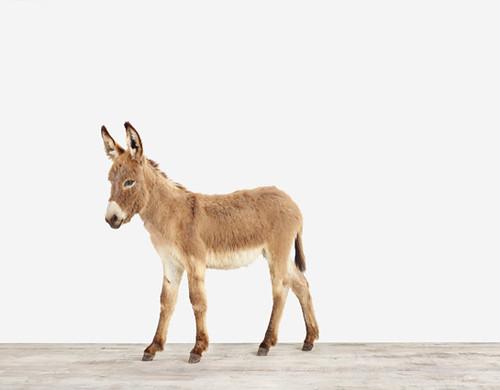 baby-Donkey01_545
