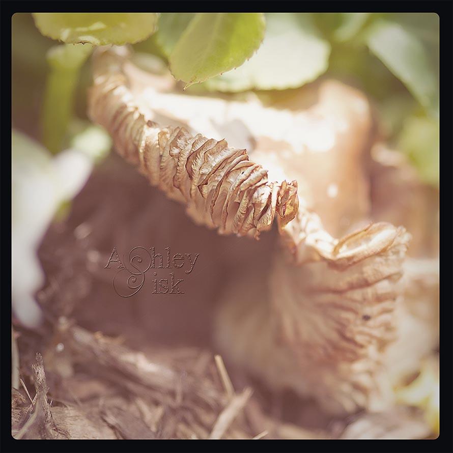 Mushroom 2 Polaroid RS
