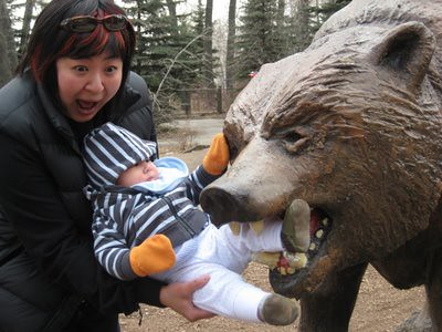 zoo_bear_attack_0213