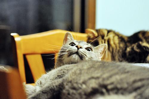 06/27/11 Mr. Baby Cat