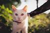 pure white (In Memory Lane~) Tags: park summer london nature cat 35mm dof bokeh mark richmond ii 5d 35l