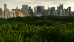 a lot of metal floating on a cloud of trees (ambery) Tags: nyc trees skyline centralpark manhattan bushes metropolitan