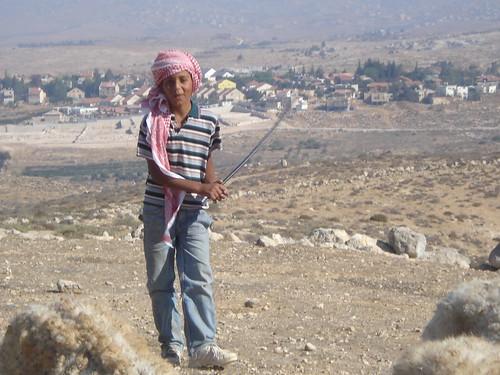 Palestinian Shepherd Boy