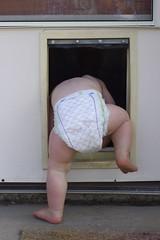 diaper dogdoor