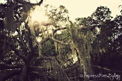 Sun Flare :) (AmysBodyDecor {Bailey Brand}) Tags: park old light sky sun lake tree nature star moss oak woods florida central conservation flare impressions blaze runnymede creationnation amysbodydecor impressionsbyamy