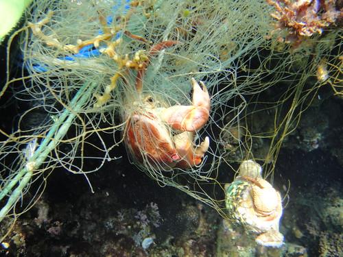 -海下世界的珊瑚狀況尚可,但數量很多的廢棄漁網卻造成宛如海洋墳場般的景象,海下志工除進行調查外,也展開搶救生命的行動