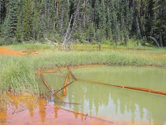 Paint Pots, Kootenay NP, Canada (Pixmac_com_br) Tags: trees summer sun canada nature water sunshine weather forest landscapes daylight woods seasons lakes nobody swamps vegetation daytime summertime np nationalparks ponds naturalworld exteriors fallentrees waterlevel paintpots utdoors kootenaynp