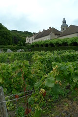 Vineyard: Abbey at Hautvillers