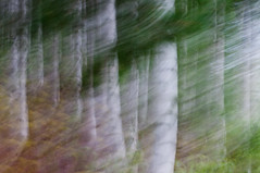 6/52 - [slow down] (mcqal) Tags: green landscape nikon slow forrest down skellefte d300 longshutterspeed 52weeks 52weeksproject nikkorafs50mmf14g