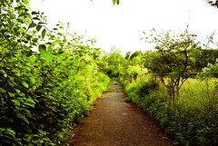 - 28 - (a.n.decker photography) Tags: lighting trees light summer sun sunlight green nature leaves fence leaf spring path grow bloom growing blooming