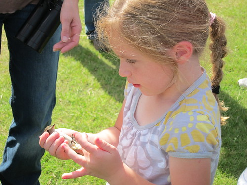 Jayli Rients, daughter of District Conservationist Heidi Rients getting hands-on experience with bird banding.