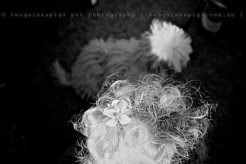 Details by twoguineapigs pet photography
