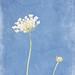 08/01/2011 In The Sky