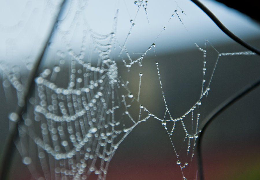 Spider web bokeh
