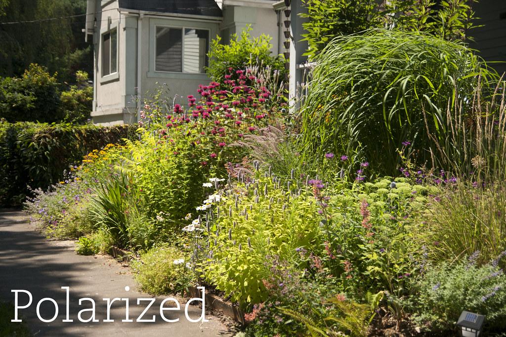 Garden - Polarizer