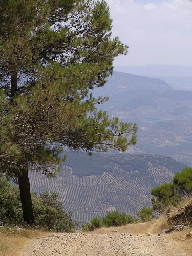 Sierra Ahíllos