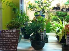 小品盆栽の写真