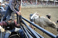 hanging on (Roberto M. Esquivel) Tags: usa cowboys pa rodeo bullriding fayettecountyfair boysandbullsrodeo