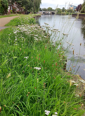 TOWPATH FLORA by Jeanette Sitton