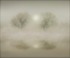 Vanishing into the mists (adrians_art) Tags: trees winter mist reflection water fog sunrise bravo floods
