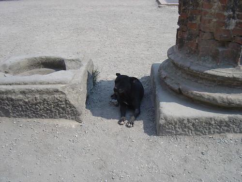 Pompei_DSC03005