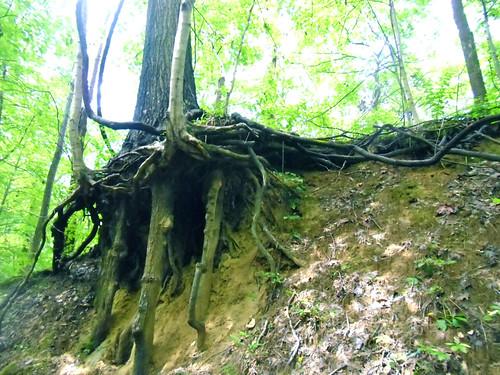 Harmonie Tree