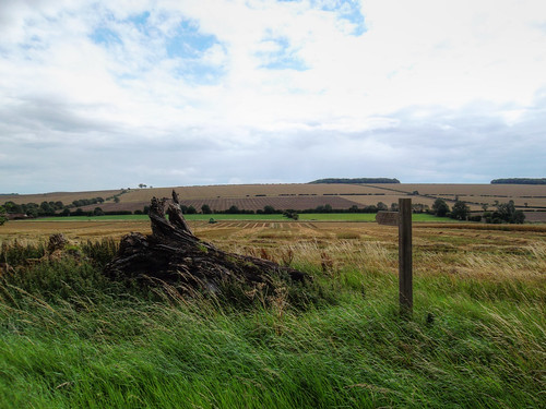 From point 7 on the official route guide, overlooking West Lutton
