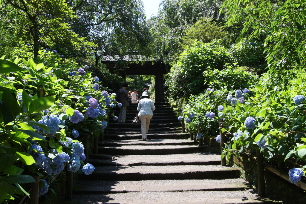 Kita Kamakura Hydrangea spot (13)