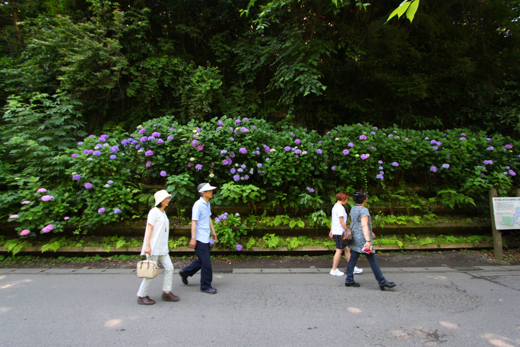 Kita Kamakura Hydrangea spot (18)
