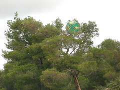 porto germeno (Vagelis Gelivas) Tags: kite tree pine