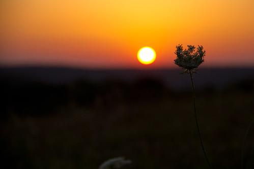 Sunset PLT