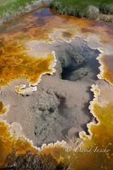 Borax hot spring, algae & mineral crust.