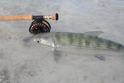 Bonefish 3