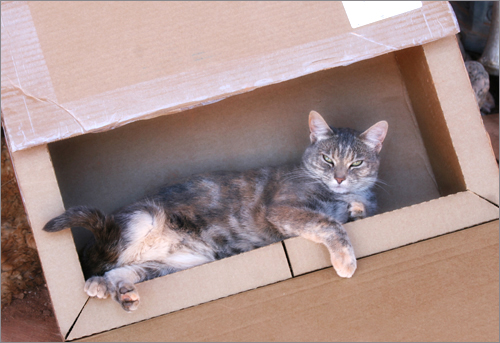 cardboardmush