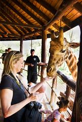 "PhotoFly Travel Club Kenya Safari 2011! • <a style=""font-size:0.8em;"" href=""https://www.flickr.com/photos/56154910@N05/5892906320/"" target=""_blank"">View on Flickr</a>"